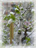 23 мая. Весна в разгаре! вот так мы и живем... :о)