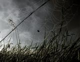 Съёмка проводилась ранним утром, после проливного дождя. Над землёй поднимался пар, пауки наплели сети для ловли насекомых. На траве и паутинах висели крупные капли росы. Я не мог равнодушно пройти мимо такой красоты и сделал серию снимков мыльницей Canon G11.