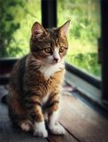 Котенок,окно