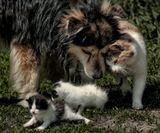 Вот тебе и кошка с собакой...