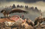http://www.zooclub.ru/birds/vidy/183.shtml