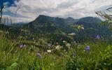 Наслаждаться звуками природы...http://video.mail.ru/mail/ninawel47/1916/2553.html