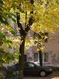 Осень, город, городской пейзаж, жёлтые листья