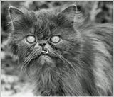 Некрасивый и несчастный брошенный больной кот слоняется по детской площадке, заглядывает в глаза и не хочет брать еду... И так уже третий день...