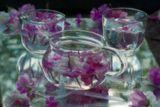 цветы, флоксы, настроение