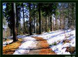 Желто-багряные опавшие листья осени и несдавшийся снег на лесных тропах, робко пробивающаяся свежая зелень - все это и есть весна в Тюрингенском лесу. Германия, склоны горы Гросс Изельберг, высота 900 м.