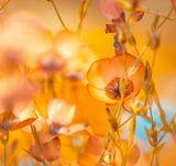 цветы осень поляна