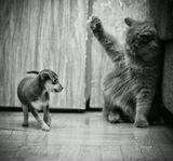 В нашем семействе пополнение, знакомство кошки с собакой проходит успешно ;)