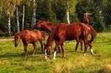 Я, было, уже прошёл мимо этих коняшек, ничем они меня не впечатлили, как и окружающий их невзрачный луг. В самом деле, гуляют себе непарнокопытные, травку щиплют, эка невидаль. Но тут услышал, как чинно выгрузившийся из огромного джипа папаша взялся радостно объяснять сыну, что это, типа, самые настоящие лошадки, живые, мама, папа и ребёночек-жеребёночек. Наследник, переварив тираду, немного подумал и спросил: -А как же они из компьютера вылезли?