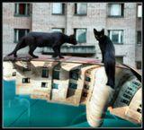 ***А сны у котов совместные - вы не знали? Да, это так.Черная кошка и кот такого же тонаЗасыпают одновременно, обычно - глаза в глаза,И каждый видит во сне еще более странный город.(Иван Храмовник. Черная кошка, черный кот)