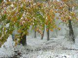 Первый снег на желтых листьях,На зеленой еще траве...Это было так необычно и ново,Как в душе твоей и моей...