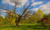 На зеленной лужайке, в цветах, под деревом С милой пери и с чащей блаженствую я.Сколько жить мне дано, до последнего часаБуду вечно с вином – в этом вера моя.