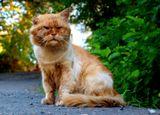 """Этот кот - """"гроза"""" и хозяин одной из сочинских помоек. Он давно """"забил"""" на кошачью гигиену, лихо гоняет собак и даже, говорят, шакалов, которые спускаются с гор ближе к зиме. Он - самам независимость, он - психолог, он - кошачий секс-символ, потому, что все котята в округе рыжие. Он - хозяин кошачьей жизни. Уважаю!!!"""