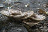 причудливой формы нашли мы грибы, решили оставить на память, кого то возможно они привлекут своей красотой не обычной