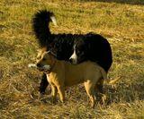 собака, прогулка, собакины друзья