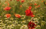 Лето красное... :)