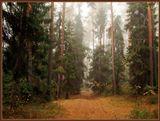 Туманное октябрьское утро...почти Шишкин...10.10.10