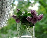 ...утро, розы, окно, и... настроение.