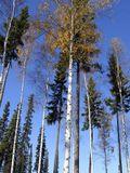 Аляска. Осень.