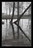 Nikon F65 ,плёнка KOnika VX Monochrome400
