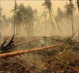Пожар 2010 г. Рязанская обл..