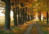 осень,вечер,прогулка