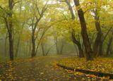 Как грустный взгляд, люблю я осень. В туманный, тихий день хожу...