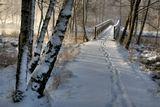Я прошла первая , так аккуратненько! Пока собиралась делать снимок, поворачиваюсь и... бредёт по моим следам другой фотограф...Швеция - Норвегия. Граница.Nina Hagen. int333