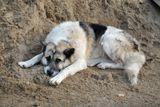 Вторая половина дня, солнце, закат, усталый пес.