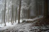 Прогулка в лесу. Туман и снег.