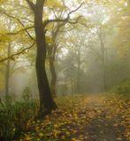 Закружила осень листопадами,заблистала хрупкой красотой...Всё сильней туманы льнут прохдадоюк ниве, утомлённой и пустой...