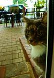 чистый плагиат - автор, отзовись, твой кот просил мышей половить (это фото из юрмальской коллекции, там в маленьком кафе иногда появляется этот персонаж, но его гоняет хозяин)...))))