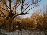 Природа. деревья.