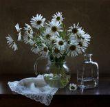 цветы,ромашки, натюрморт