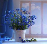 натюрморт,цветы,