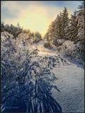 """Вот такое вот """"равновесие"""": тело +36,6 а снаружи -36.6  :) Морозное январское утро. Бурятия."""