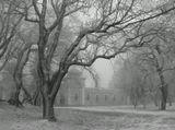 В одиночестве аллея,Грустно парку в тишинеУ деревьев леденея,Стынут кроны в вышине.