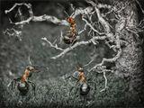 все муравьи умеют быть няньками, солдатами, охотниками, пастухами, строителями, фуражирами и т.д., в зависимости от насущных нужд муравейника...но есть элита, которая всю жизнь занимается только одним каким-то делом...это - менторы - мудрейшие по профессии