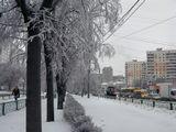 Вот такой ледяной панцирь на деревьях... :(