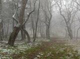 Зимний парк,пустая аллеяпервый снег на замершей землеБелой шапкой лежит леденеяОдиноко грустит в тишине.