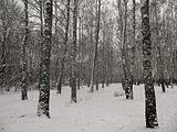 """Лес 2 января)) Снежно,  по колено утопая в снегу, мы бродили часа 1,5. Необыкновенно чистый воздух дубового и березового леса, лёгкий морозец. Все деревья украшены небольшими """"снежками"""", складывается такое сказочное ощущение русской зимы :)"""