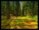 Лес, лесные тропы, утро