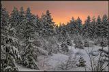 Зимнее раннее утро в тайге. Бурятия.