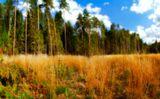 Поле, опушка, лес, осень