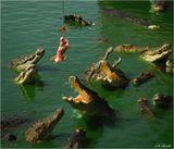 Крокодиловая ферма. Паттайя (Таиланд).