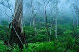 В это утро шел дождь. Я, конечно же, обрадовался! Можно пойти в лес-болото, там будет красивый туман!Обрадовались и пиявки... )))за утро, пока я фоткал и бродил, 3 штуки успело меня укусить )))http://FotoForge.net