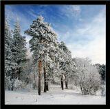 картинки зимы фото http://www.bfoto.ru/landscape3.php