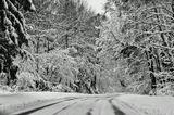 зима, дорога, лес, деревья, снег