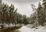Зимний вечер, тусклый свет...В белый снег весь лес одет.В белых шубах, в белых шапках,И мороз им шепчет сладко:Спи, березка, спи, сосна,Жди, когда придет весна...