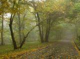 Осенним листопадом кружится голова...